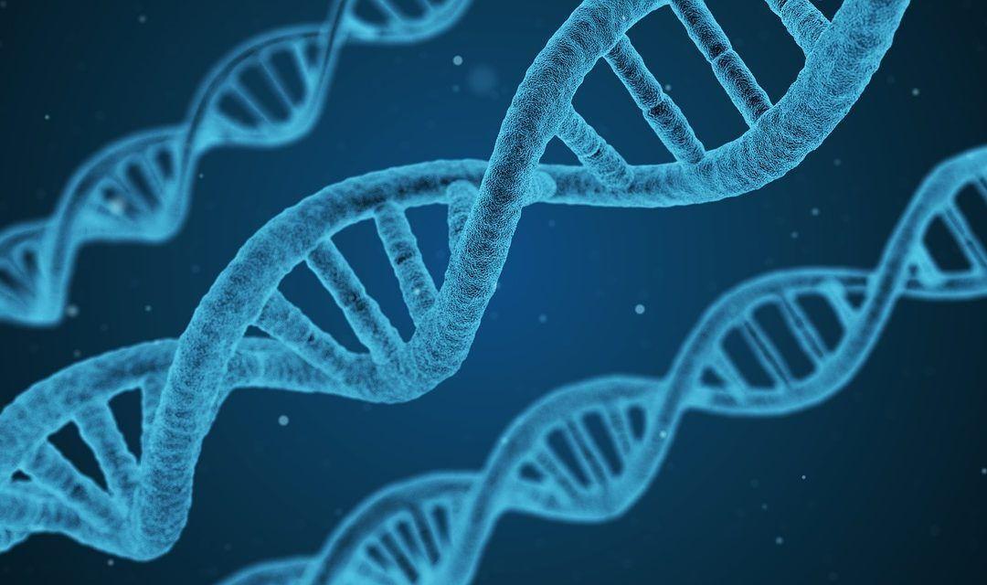 Células de la pulpa dental y genética